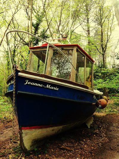 Art Boats Bristol Woods England Taking Photos Walking Around Nature