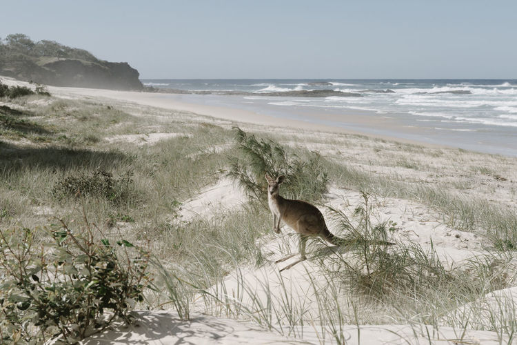 Animal Animal Themes Beach Canine Day Dog Domestic Domestic Animals Grass Kangaroo Land Mammal Nature No People One Animal Pets Plant Sea Vertebrate Water
