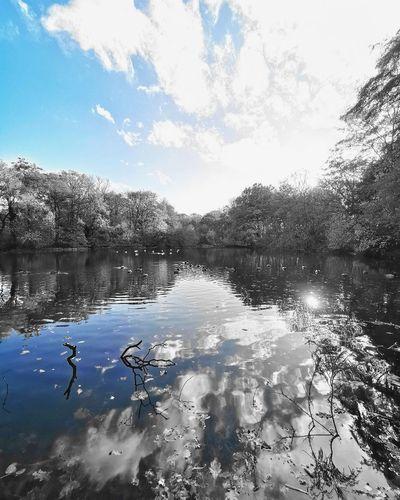 Sherdley Park UK Sherdley Park Water Bird Lake Reflection Swimming Sky