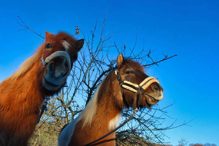 Low angle view of horse in ranch against sky