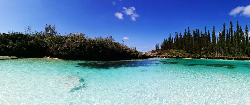 Nuovacaledonia Ile Des Pins Piscine Naturelle Piscinas Naturales Tree Water Blue Nature Scenics Beauty In Nature Summer Travel Destinations Outdoors Day Landscape No People Sky Tranquility Vacations