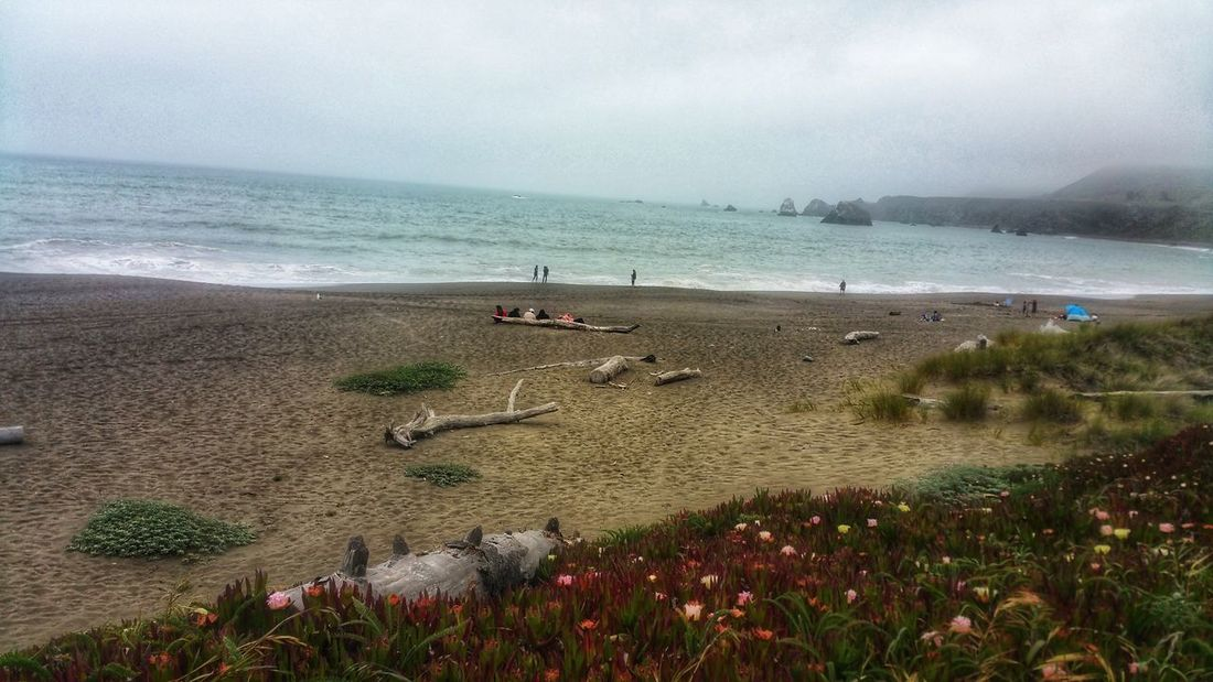Lined up on a driftwood log -foggy day at the beach Fog Tent At Beach Playing On Beach Background Moment Zen Copy Space Meditation Wildflowers Red Burgandy Weathered Driftwood Log Water Sea Beach Flower Sand Grass Foggy Seascape Wave Surf Marram Grass Coast Weather Fog Mist Low Tide Shore