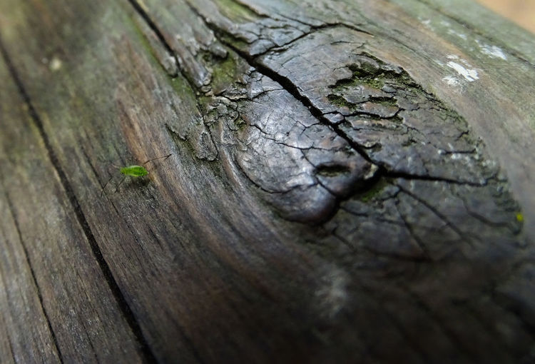 Bug on a log Bug Green Bug Little Green Bugs Bug On A Log Animal Themes Close-up Cracked Day Knotted Wood Nature No People Outdoors Rough Textured  Tree Tree Ring Tree Stump Tree Trunk Wood - Material Wood Grain