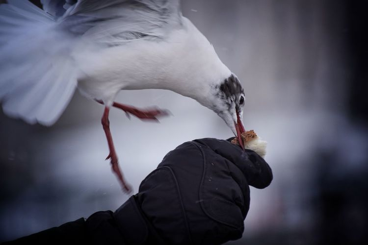 Close-up of bird eating by the hand