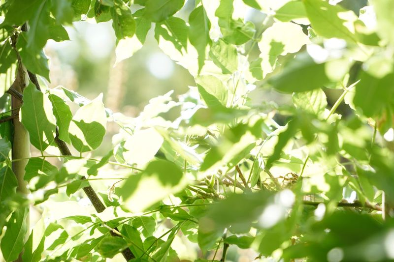 Low angle view of leaves on tree during sunny day