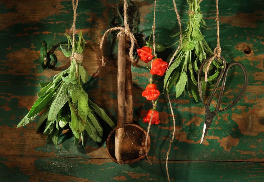 Herb Herbs Vintage Kitvhen Nostalgia Wood Table Plant Country Life Sage Salvia