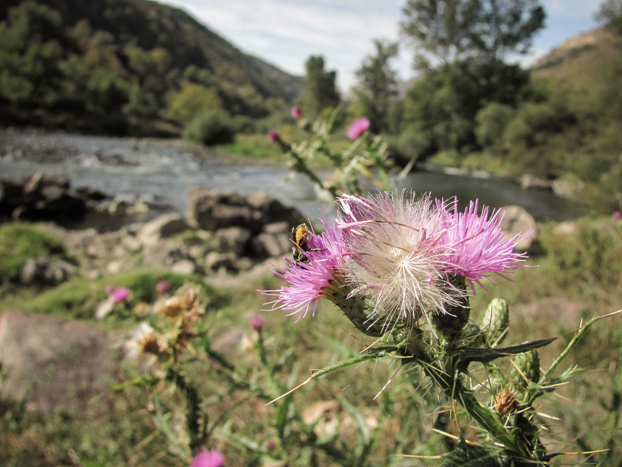 plant, freshness, vulnerability, flower, beauty in nature, flowering plant, fragility, growth, close-up, nature, focus on foreground, thistle, petal, inflorescence, flower head, no people, pink color, purple, day, field, outdoors, pollination