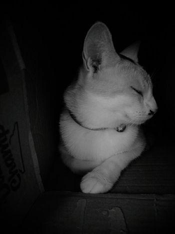 讓我靜一靜 Cat♡ Cat Lovers Cute Pets Cute Cats EyeEm Cats Cats Cat Meow🐱 Cats 🐱 Black & White
