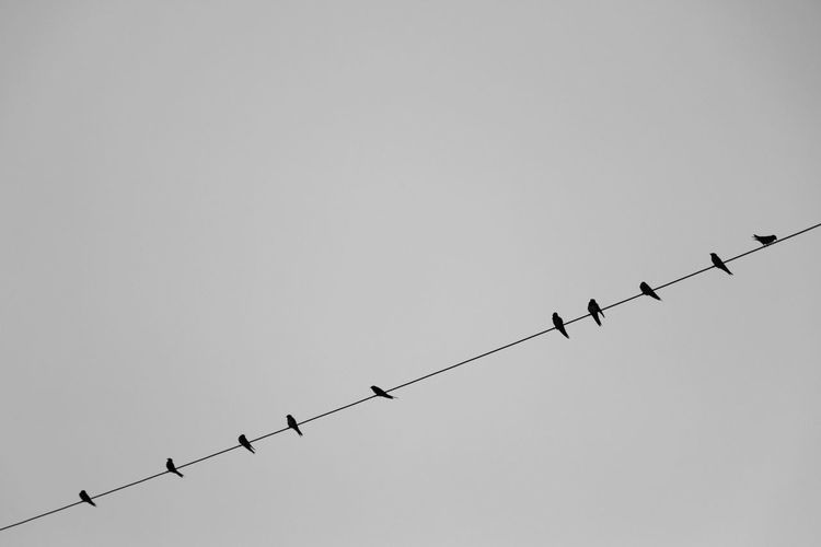 Low angle view of silhouette birds perching on power line