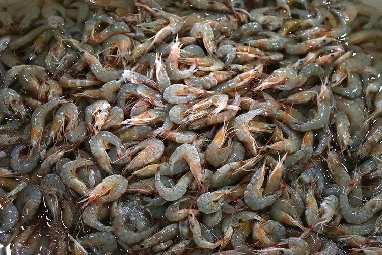 Fresh shrimps in the fish market ready for sale Seafood Food And Drink Food Freshness Retail  For Sale Raw Food Market Healthy Eating Animal Wellbeing Fish Market Sale Fishing Industry Shrimps Shrimp Shrimp - Seafood