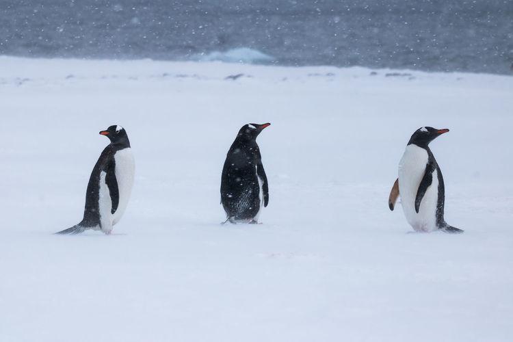 View of birds on snow