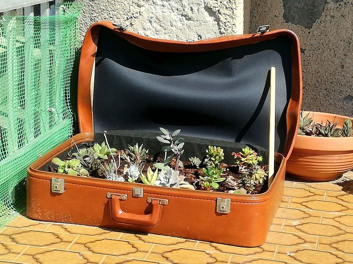 Day Suitcase Luggage No People Plants And Flowers Outdoors Close-up Cacti Funny Idea Growth, Urban Gardening, Reusereducerecycle Reuse And Recycle