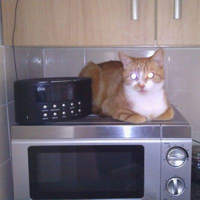 Conclusive proof that cats & cats eyes ate powered by microwaves & DAB signals Hobbes Cat