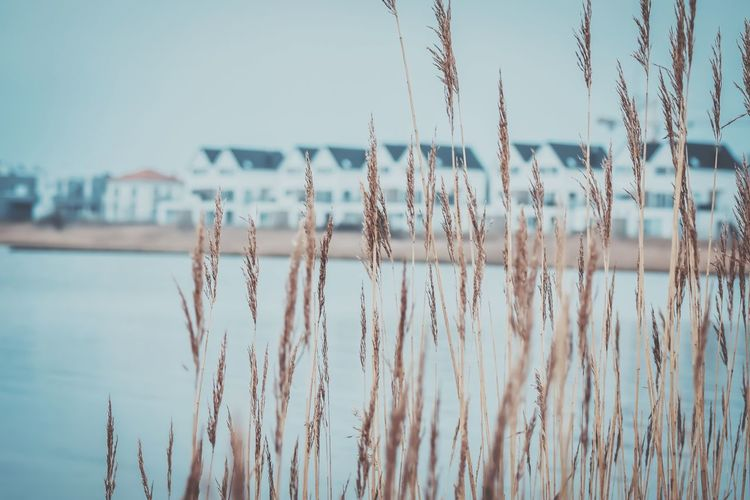 Ostseeresort Olpenitz Building Photographylovers Photography Winter Harbor Kappeln Cold Temperature Schleswig-Holstein Schlei Resort Travel Destinations Travel Vacations Photo Snapshot Nikon Water Beach Sea Sky Close-up Dew Plant Life Wet Foreground Rainy Season Blade Of Grass Droplet 17.62° The Art Of Street Photography