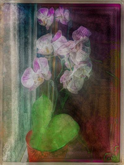 Innate Radiance. NEM Submissions NEM GoodKarma Ultra Color NEM Actions EyeEm Best Edits Flowerporn NEM Painterly NEM Still Life Dont Be Square