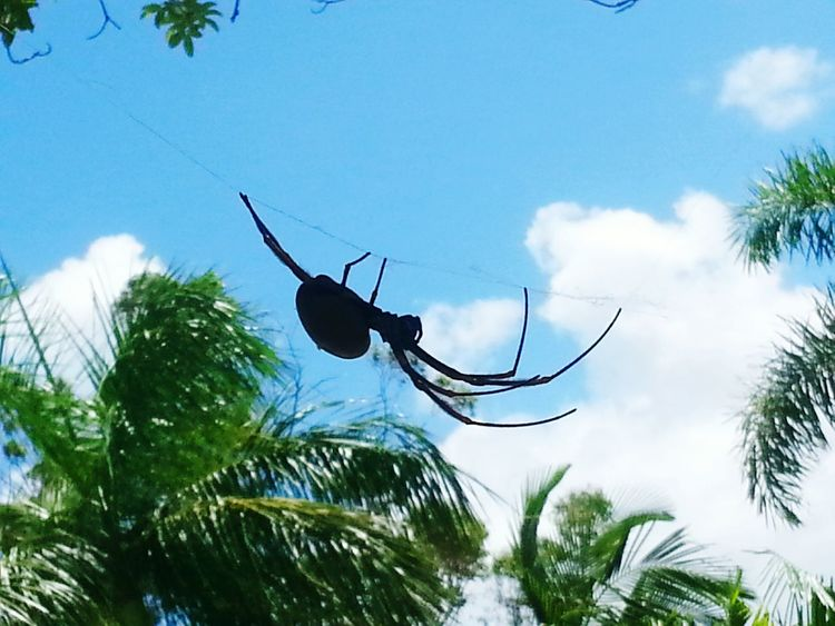 A spider on a Web hanging out Tree Palm Tree Day Sky Outdoors Low Angle View Plant Nature Spider Web Nature