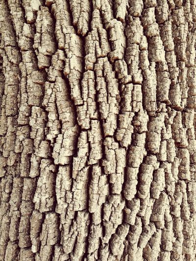 Textured  Backgrounds Full Frame Pattern Tree Tree Trunk Treescollection Trunk Detail Trunk Trunk Tree Art Nature Nature Photography