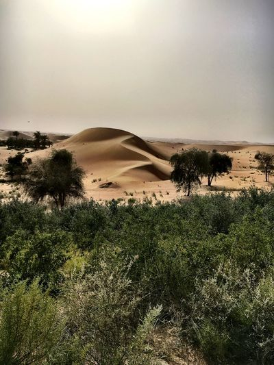 Arid Climate Beauty In Nature Bush Climate Day Desert Environment Growth Land Landscape Nature No People Non-urban Scene Outdoors Plant Sand Sand Dune Scenics - Nature Sky Tranquil Scene Tranquility