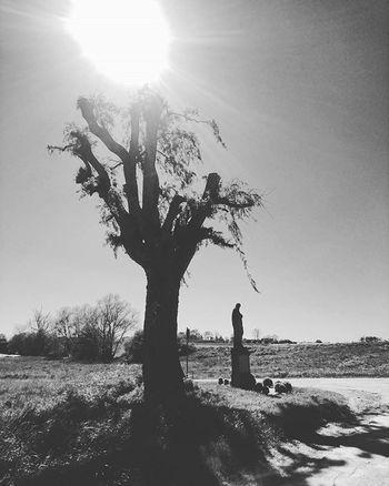 Bnwworld Bnwlandscape Bnw Trees Trees Statue Christ Christian Jezus Treeofinstagram Sun Sunshine Blackandwhite Instalike Igersgermanyofficial Iggermany Landscape_captures Architecture Germanarchitecture Christianart Art Bestoftheday Beautiful Mobilephotography