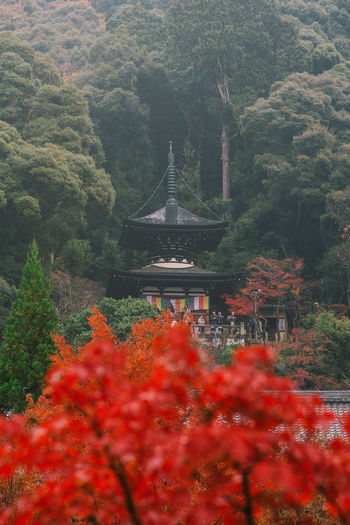 Scenic view of red building and trees in temple
