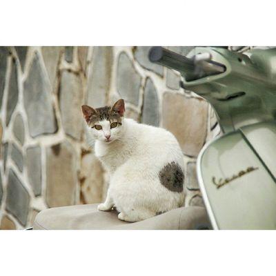 Thasos Thassos Scalamarion Greece Greecestagram Catsofinstagram Cat Vespa Gtcreate Canon6d