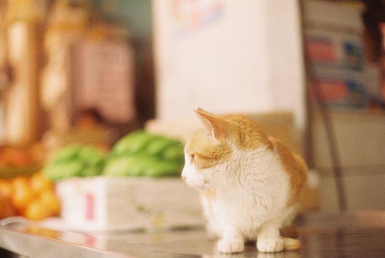EyeEm Best Shots 35mm Film Film Photography Film Analogue Photography Sunny Day Traveling Okinawa Cat