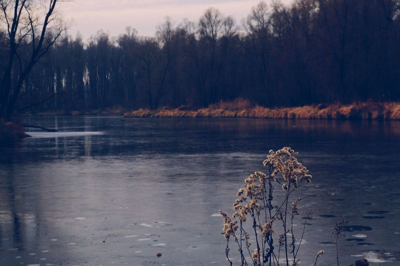 Nature Tree Winter Cold Temperature Beauty In Nature Tranquility Frozen Bare Tree Tranquil Scene Water No People Outdoors Lakeside Scenics Landscape Sky Day Vscocam EyeEm Best Shots