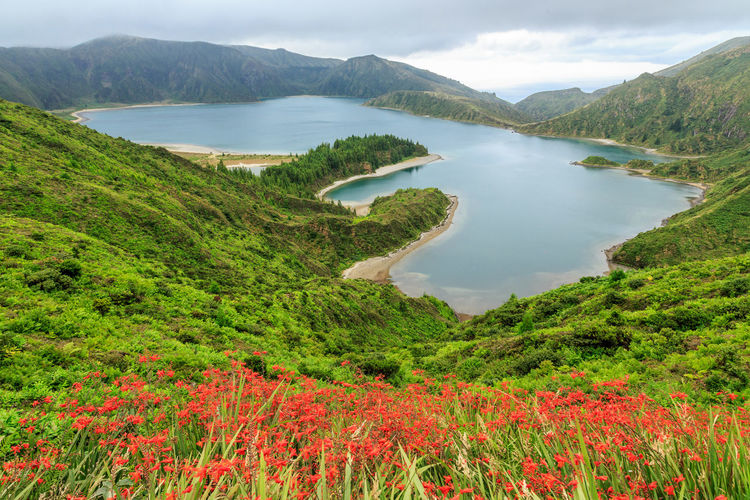 S. Miguel , Açores Azores Lagoon Of Fire Lagoa Do Fogo Beauty In Nature Plant Water Scenics - Nature Tranquil Scene Tranquility Mountain Growth Green Color Nature Cloud - Sky Non-urban Scene Day Lake Tree Sky No People Idyllic Land Outdoors