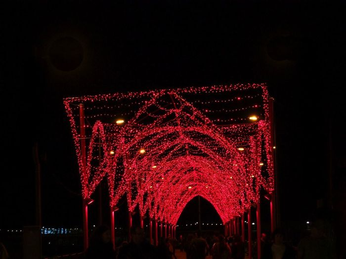Red Illuminated Waklway, Avenue do Mar Black Background Christmas Lights Composition Fun Funchal Low Angle View Madeira Madeira Island Night Photography Portugal Tourist Attraction  Unusual Christmas Christmas Decoration Covered Walkway Festival Of Lights Illuminated Low Angle View Night Outdoor Photography Red And Black Colour Red Lights Tourism Travel Destination Walkway
