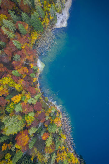 Aerial view of autumn trees in forest by sea