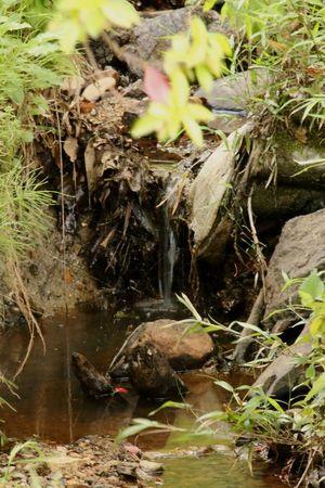 小川 Creek 小鳥の森 Canon EOS 70d Sigma 18_300mm Photo