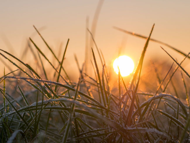 Morning light. Beauty Beauty In Nature Bokeh Close-up Dof Early Morning Grass Growth Morning Light Nature No People Outdoors Plant Rural Scene Sun Sunbeam Sunset Tranquil Scene Winter
