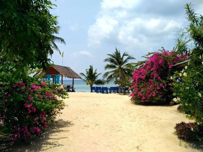 Ko Phangan, Thailand Tree Cloud - Sky Flower Outdoors Nature Plant Sand Day Sky Summer Beauty In Nature No People Travel Destinations Beach Scenics Tranquility Sea View Sea Life Archipelago Sea Beauty In Nature Horizon Over Water Sea And Sky Nature Water