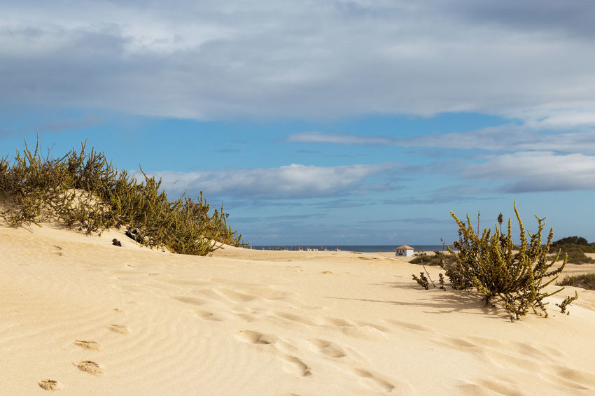 Las Dunas Hello World Taking Photos Vacations Beach Beauty In Nature Bushes Cloud - Sky Day Horizon Over Water Landscape Las Dunas Nature No People Outdoors Sand Sand Dune Scenics Sea Sky Tranquil Scene Tranquility Tree Water