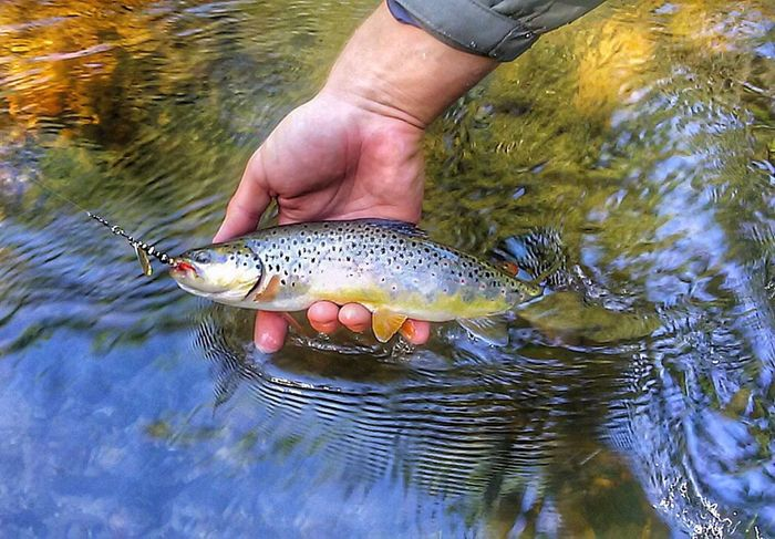 Fishing Trout River Nature Summer Fish Freedom