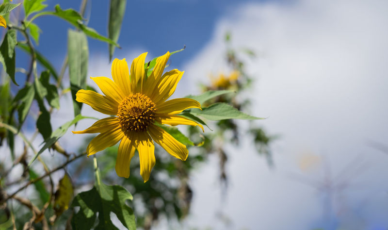 yellow smile Flower Yellow Plant Petal Nature Flower Head Uncultivated Sunflower Beauty In Nature No People Outdoors Sky Growth EyeEmNewHere