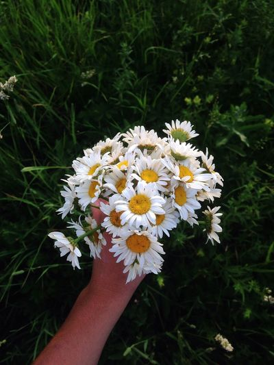 Human Hand Flowering Plant Human Body Part Freshness Hand Plant Flower Head One Person