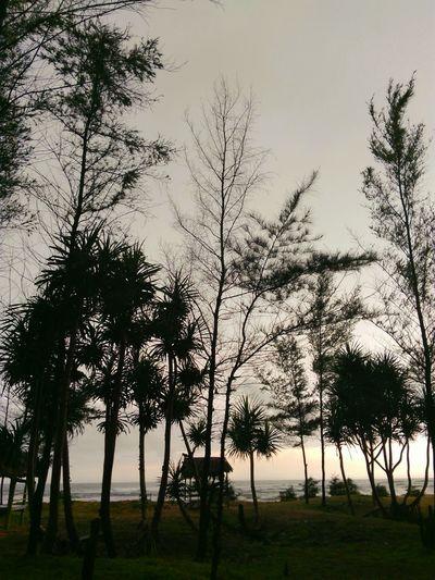Nature Trees Taking Photos Siluet Tre