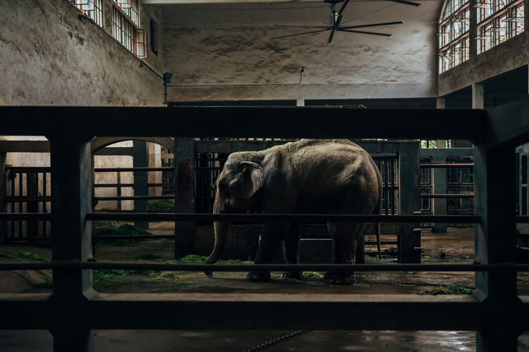 Side view of elephant standing in zoo