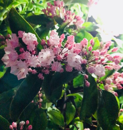 Flowering Plant Flower Plant Freshness Beauty In Nature Growth Fragility Close-up Pink Color Flower Head Springtime