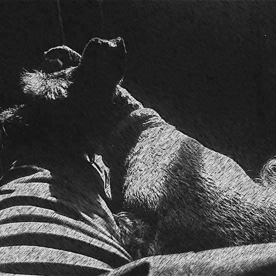 Con Ashbiee Mexicocity  Happiness Fun Pet Instagood Black Photooftheday Instagram Relax Love Ciudaddemexico Eye4photography  EyeEm Best Shots Mexico Animals Blanco Y Negro Blackandwhite Photography FotoDelDia Masco Relaxing Feliz