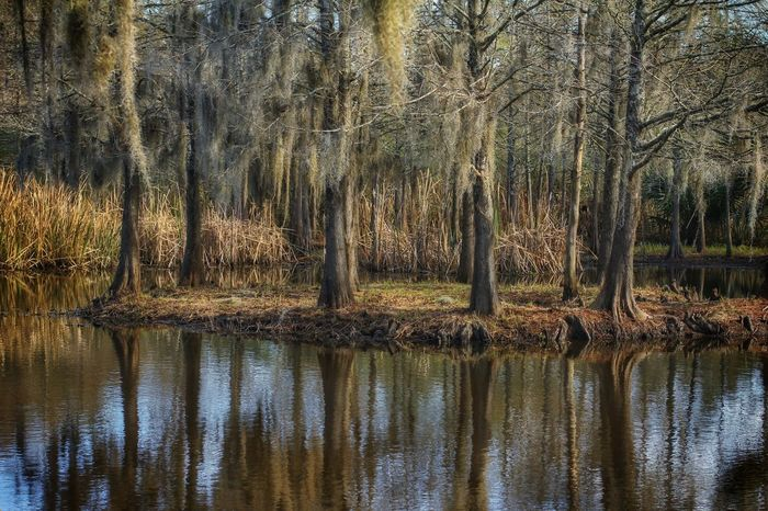Southern Louisiana swamp EyeEmNewHere Avery Island Nature Reflection Tree Beauty In Nature Tranquility No PeopleWater Outdoors Forest Tree Trunks Spanish Moss Louisiana