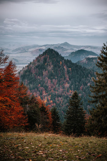 Scenic view of pine trees against sky during autumn