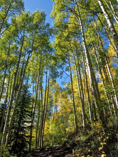 Maroon Bells Colorado Hike No People Nature Outdoors Rocky Mountains Fall Mountain Vacation Landscape Aspen Trees Colors Forest Tree The Week On EyeEm Been There. Aspen, Colorado