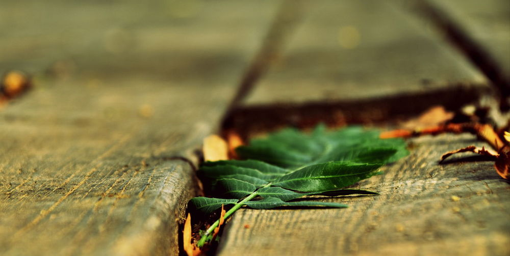 Close-up Day Freshness Leaf Nature No People Outdoors Selective Focus Wood - Material