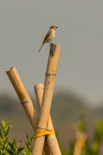 Low angle view of bird perching on wooden post