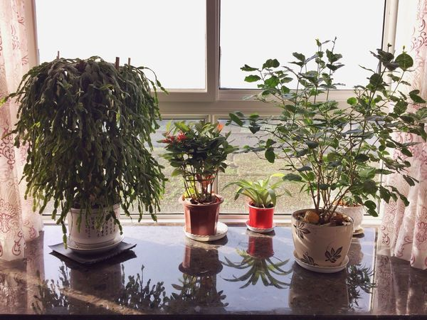 Balcony Sunshine House Plants In my maternal aunt's house. Enjoy two days.