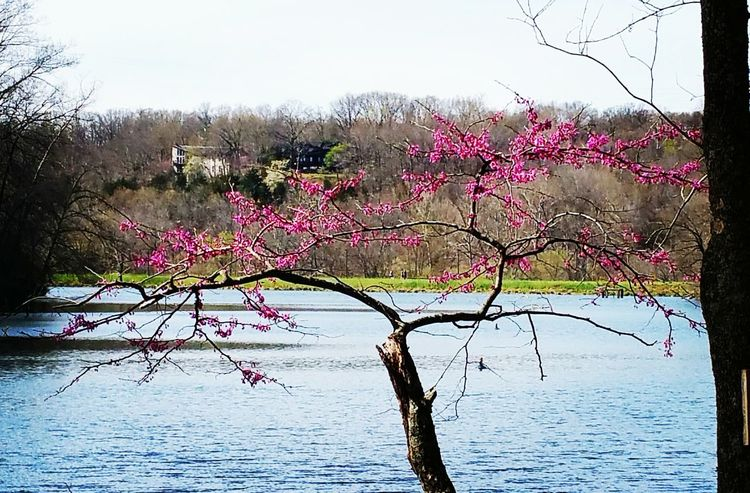 Lakeview Lakeside Lake Water Waterfront Beauty In Nature Tree Sky Nature Scenics Outdoors Tranquility Day Branch Growth Purple Flower Rogers, Arkansas