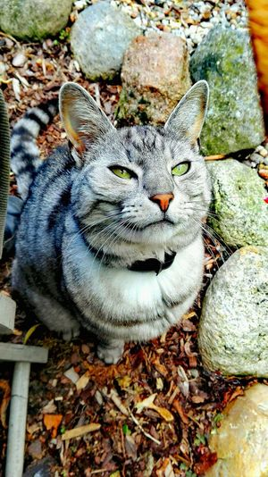 Taking Photos Check This Out Cheese! Hi! Love My Cat Catslife Cat Of The Day Cats Of EyeEm Home Is Where The Art Is In My Garden The Places ı've Been Today Holiday 2016 Bokeh Relaxing Striped Cat Hello World August2016 Showcase August Garden Photography Summer 2016