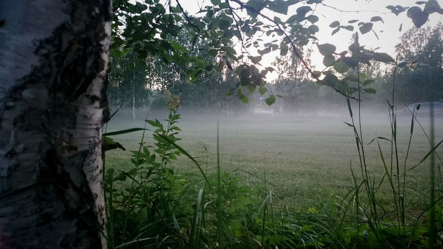 Evening mist and Midnight Sunlight ar 23:20. Nature Beautiful Night Mist